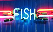Illuminated-Fish